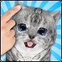 Gatos el Gato Gatito que Habla