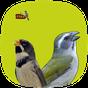 Pássaros de Fibra